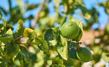 Какие фрукты на Кипре по месяцам